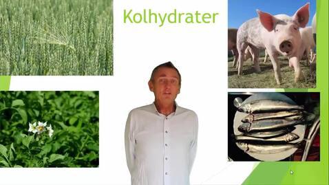 del 6  Kolhydrater